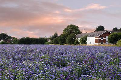 Photograph - Fields Of Blue by Gill Billington
