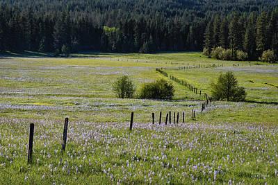 Photograph - Fields Of Blue by Leland D Howard