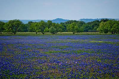 Fields Of Blue Original