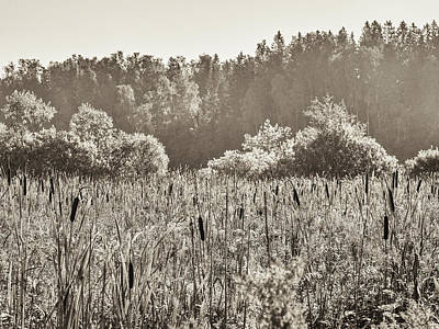 Photograph - Fields Of Bulrush by Ismo Raisanen