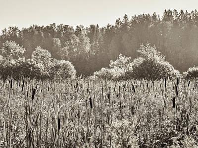 Photograph - Fields Of Bulrush by Ismo Raisanen