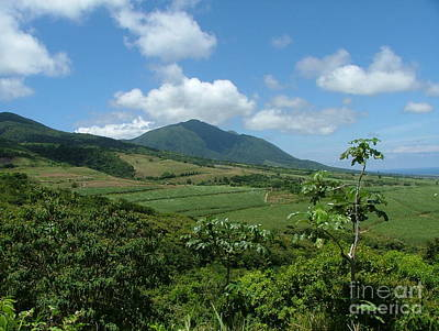 Photograph - St. Kitts Fields Of Cane by Neil Zimmerman
