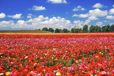 Fields Of Flowers At Nir Banim Original