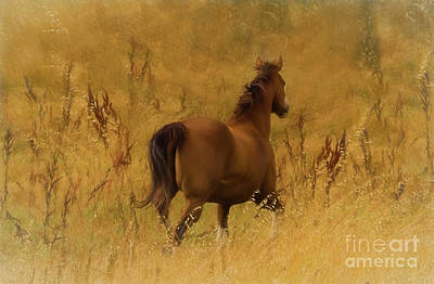 Spunky Digital Art - Fields Of Fun by Jacque The Muse Photography