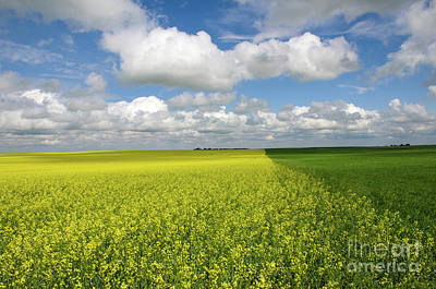 Fields Of Gold Photograph - Fields Of Gold And Green by Bob Christopher