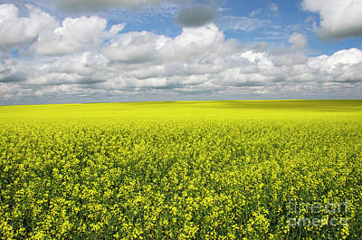 Photograph - Fields Of Gold by Bob Christopher