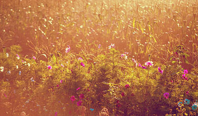 Photograph - Fields Of Gold  by Jenny Rainbow