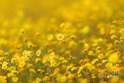 Photograph - Fields Of Gold by Parrish Todd
