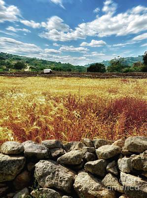 Fields Of Gold Art Print by Stephan Grixti
