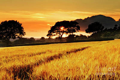 Photograph - Fields Of Gold Sunset by Terri Waters