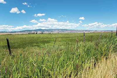 Photograph - Fields Of Grass In Central Washington by Tom Cochran