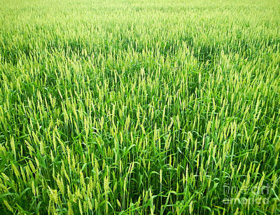 Photograph - Fields Of Green by Glenn Gordon