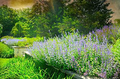 Photograph - Fields Of Purple by Diana Angstadt