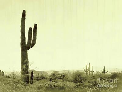 Photograph - Fields Of Saguaro V by Tim Richards