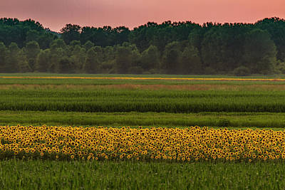 Photograph - Fields Of Sunflowers by Garry McMichael
