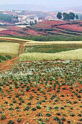 Fields Of The Redlands - 2 Art Print