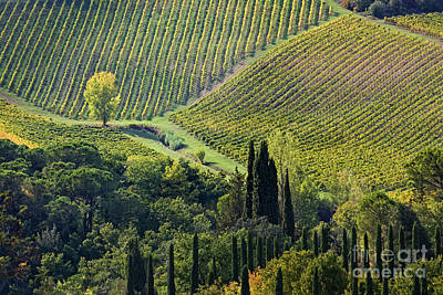 Photograph - Fields Of Tuscany by Scott Kemper