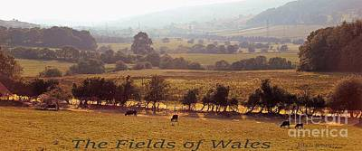 Photograph - Fields Of Wales by Rita Brown