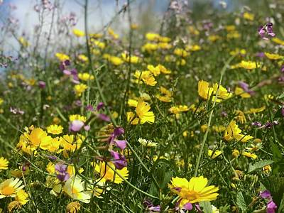Photograph - Fields Of Wildflowers In Bayview by Lynda Anne Williams