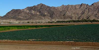 Fields Of Yuma Art Print by Greg Patzer