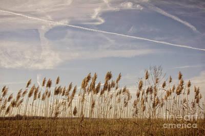 Photograph - Fields O'grain by Diane Enright