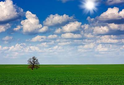 Abstract Trees Mandy Budan - Field,tree and sky by Boyan Dimitrov