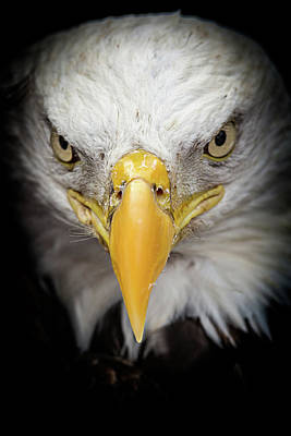 Photograph - Fierce by CJ Schmit