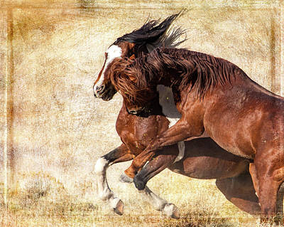 Photograph - Fierce Fight 2 by Mary Hone