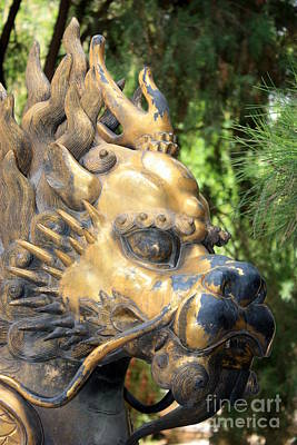 Lion Photograph - Fierce Foo Dog Face by Carol Groenen