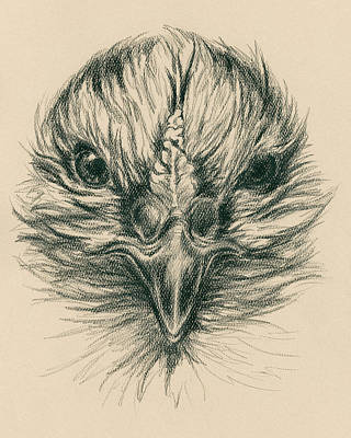 Drawing - Fierce Hen by MM Anderson