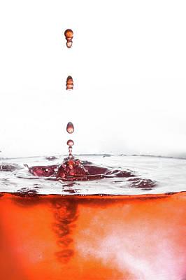 Photograph - Fierce Orange by Elvira Pinkhas