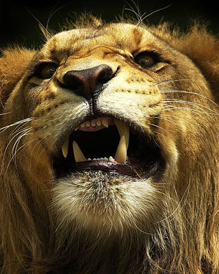 Lion Photograph - Fierce by Wade Aiken