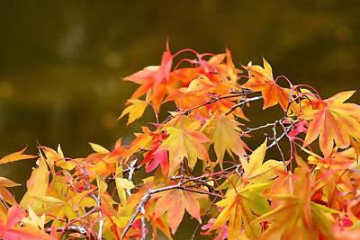 Photograph - Fiery Autumn by Art Block Collections