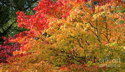 Plant Color Changes Photograph - Fiery Autumn by Tim Gainey