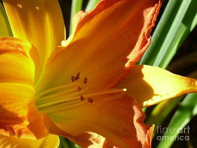 Photograph - Fiery Daylily by Terri Thompson