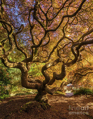 Photograph - Fiery Fall Colors Tree Of Life by Mike Reid