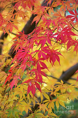 Photograph - Fiery Fall by Tim Gainey