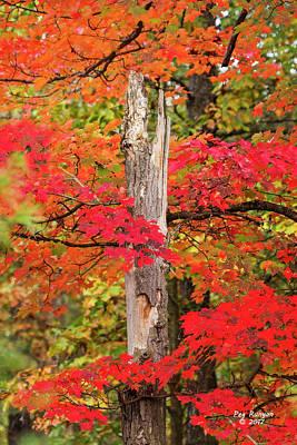Photograph - Fiery Forest by Peg Runyan