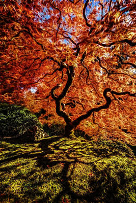 Photograph - Fiery Japanese Maple by Wes and Dotty Weber
