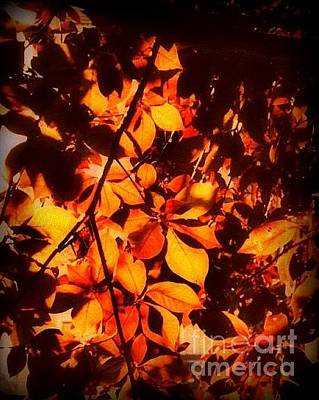 Photograph - Fiery Leaves Of Autumn by Miriam Danar