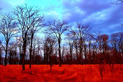 Photograph - Fiery Trees by Dora Hathazi Mendes