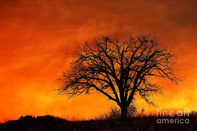 Photograph - Fiery Treescape by Clare VanderVeen