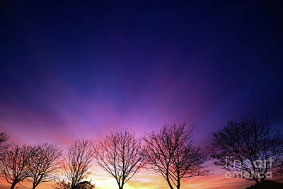 Fiery Winter Sunset With Line Of Bare Trees Art Print