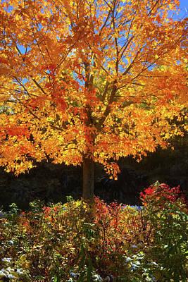 Bringing The Outdoors In - Fiery Yellow Autumn Leaves - Burlington Vermont Autumn by Joann Vitali