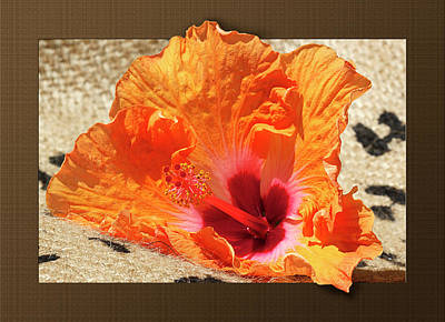 Photograph - Fiesta Colors Hibiscus by Phyllis Denton