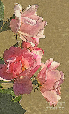 Photograph - Fifty Shades Of Pink - Roses On A Summer Day by Miriam Danar