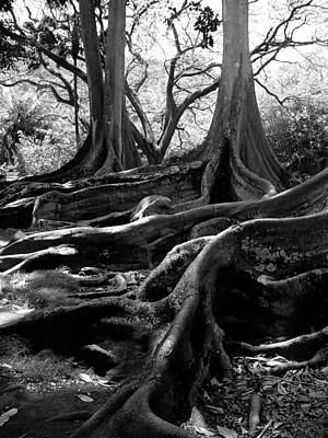 On Paper Photograph - Fig Tree Tango by Patricia Bigelow