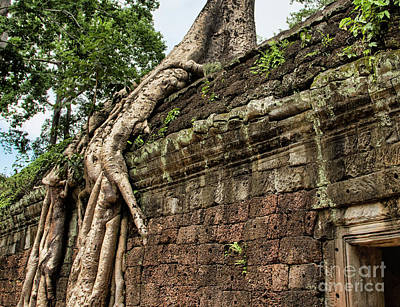 Fig Trees Cambodia Taprohm Art Print by Chuck Kuhn