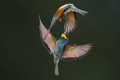 Fight Photograph - Fight Between Rainbows by Marco Redaelli