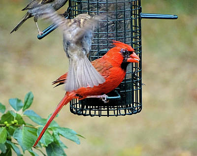 Photograph - Fight For Place On Bird Feeder by Lilia D